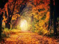 autumn-3186876__340