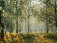 forest-1072828__340