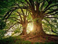 tree-3822149__340